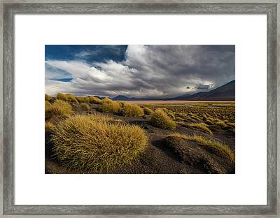 Grass Hat Framed Print by Aaron Bedell