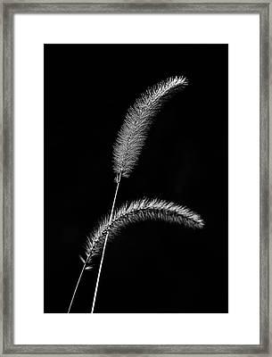 Grass In Black And White Framed Print