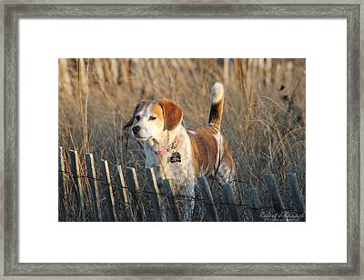 Grass Is Always Greener... Framed Print