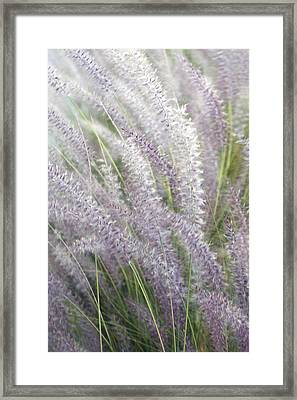 Framed Print featuring the photograph Grass Is More - Nature In Purple And Green by Ben and Raisa Gertsberg