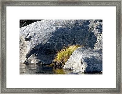 Framed Print featuring the painting Grass by Larry Darnell