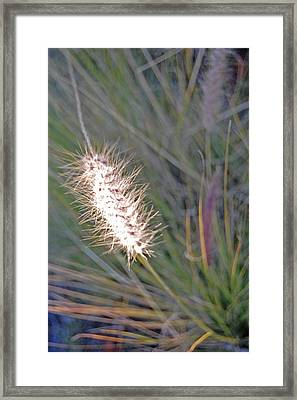 Grass Light Framed Print by Jean Booth