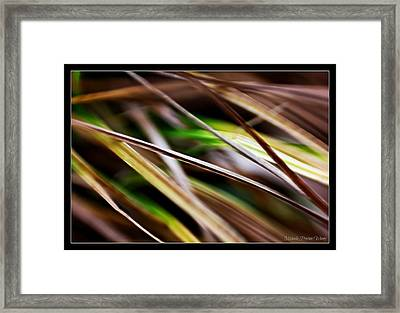 Framed Print featuring the photograph Grass by Michaela Preston