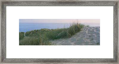 Grass On A Sand Dune, Indiana Dunes Framed Print
