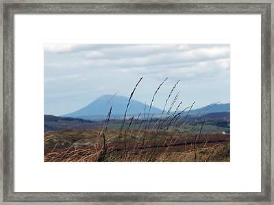 Grass Framed Print by Paul  Mealey