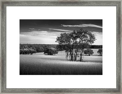 Grass Safari-bw Framed Print by Marvin Spates