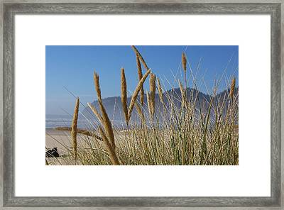 Framed Print featuring the photograph Grass Seeds On The Beach by Angi Parks