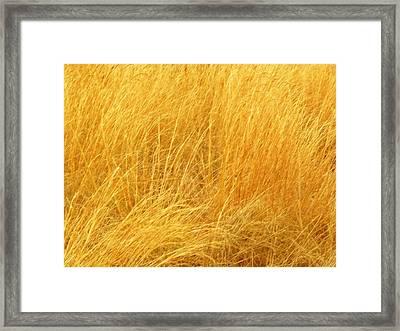 Grass Shades Framed Print by Kim Zwick