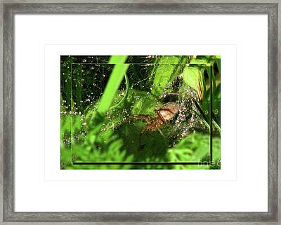 Grass Spider Framed Print by Deborah Johnson
