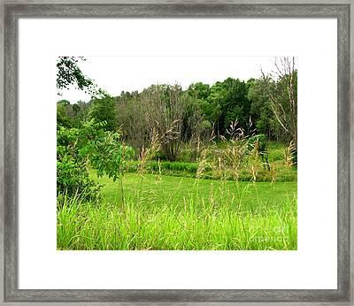 Swaying Grass Framed Print