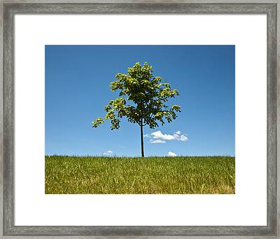 Grass Tree Cloud Sky Framed Print by Tom McCarthy