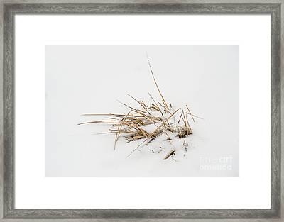 Grass Vignette Framed Print by Fred Lassmann