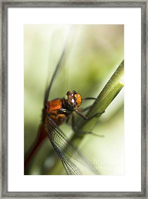 Grassblade Dragonfly Framed Print by Jorgo Photography - Wall Art Gallery