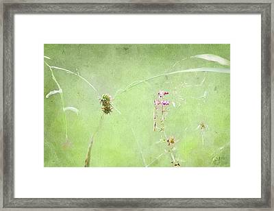 Grasses And Blooms Framed Print