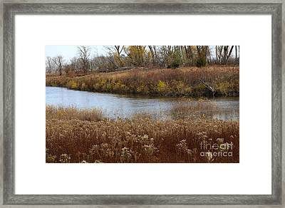 Grasses Of Autumn Framed Print by Elizabeth Winter