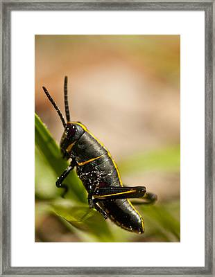 Grasshopper 2 Framed Print by Anthony Towers