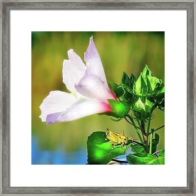 Grasshopper And Flower Framed Print