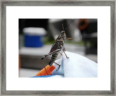 Dancing Grasshopper At The Pool Framed Print