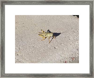 Grasshopper Curiosity Framed Print