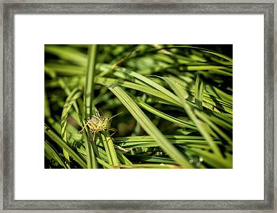 Grasshopper In The Grass, No. 1  Framed Print