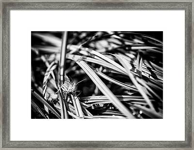 Grasshopper In The Grass, No. 1 Bw Framed Print
