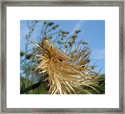 Framed Print featuring the photograph Grasshopper On Throne Of Straw by Jeanette Oberholtzer