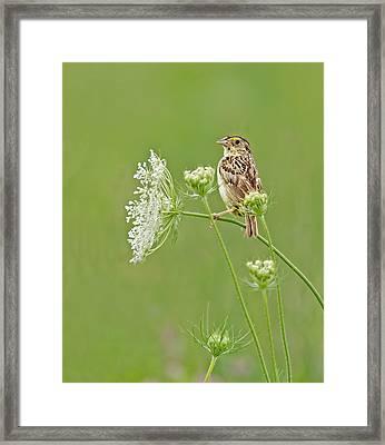 Grasshopper Sparrow Framed Print
