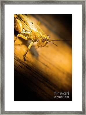 Grasshopper Under Shining Yellow Light Framed Print