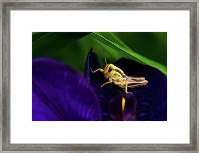 Grasshopper With Attitude Framed Print by Douglas Barnett
