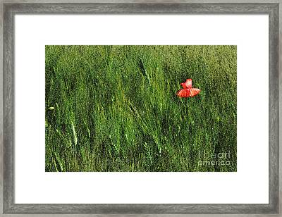 Grassland And Red Poppy Flower 2 Framed Print by Jean Bernard Roussilhe