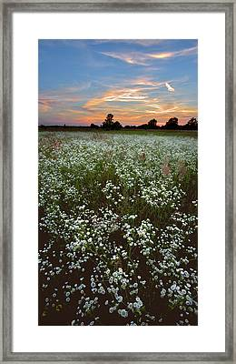 Framed Print featuring the photograph Grassland Blossom. Lebedivka, 2018. by Andriy Maykovskyi