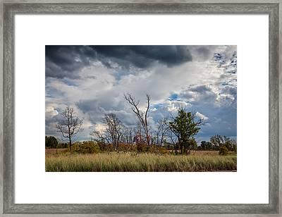 Grasslands At Indiana Dunes Framed Print