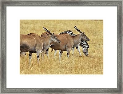 Grasslands Framed Print by Laura Mountainspring