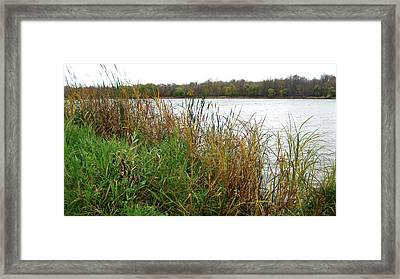 Grassy Bank Framed Print
