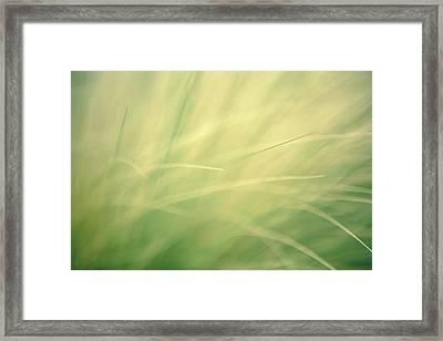 Grassy Daydreams Framed Print