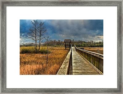 Grassy Glades Framed Print by Debra and Dave Vanderlaan