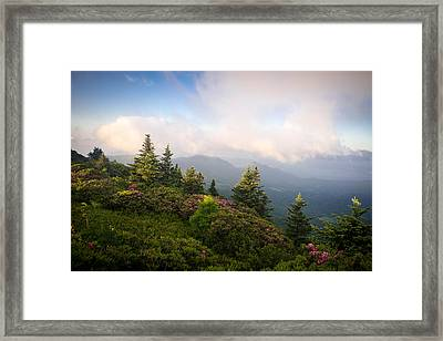 Grassy Ridge Rhododendron Bloom Framed Print
