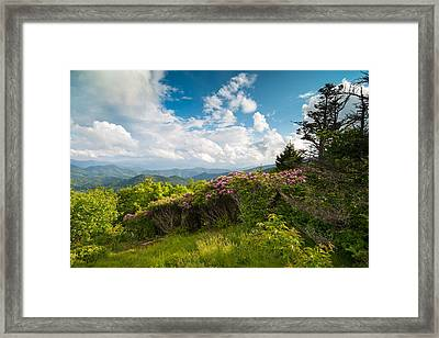 Grassy Ridge Roan Highlands Rhododendrons On The Appalachian Trail Framed Print