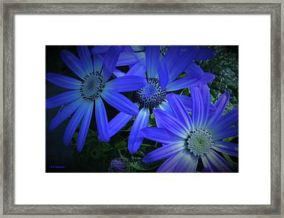 Gratitude Framed Print by B Vesseur