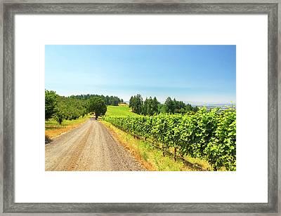 Gravel Road And Vineyard Framed Print by Jess Kraft