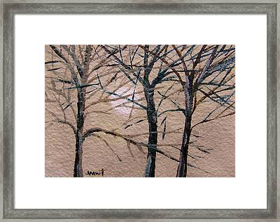 Gray And Dark Trees Framed Print by John Williams