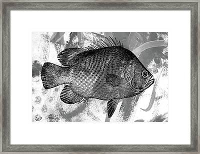 Gray Fish Framed Print