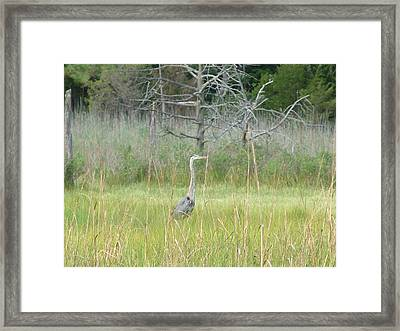 Gray Ghost Framed Print by Kevin Callahan