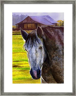Gray Horse Framed Print by Catherine G McElroy