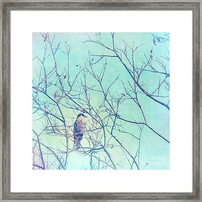 Gray Jay In A Tree Framed Print