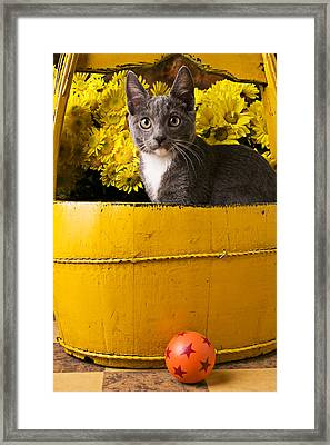 Gray Kitten In Yellow Bucket Framed Print by Garry Gay