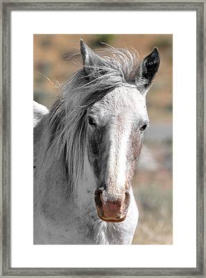 Gray Mare Framed Print