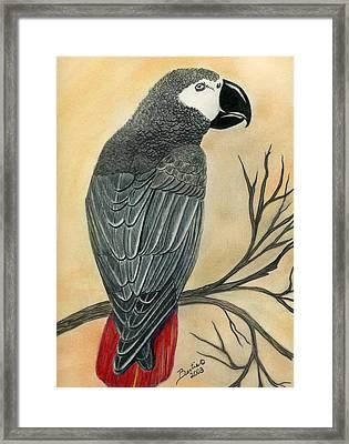 Gray Parrot Framed Print