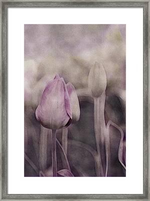 Gray Spring Morning Framed Print