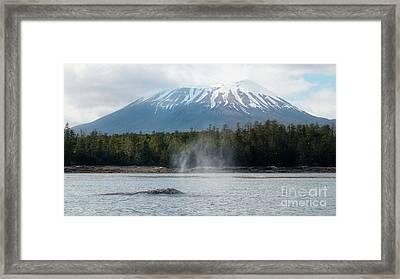 Gray Whale, Mount Edgecumbe Sitka Alaska Framed Print